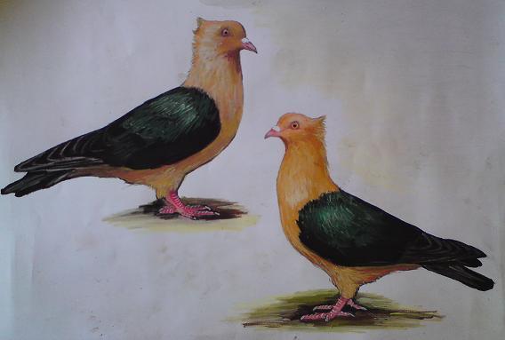 Taubengemälde